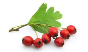 photo of hawthorn berry