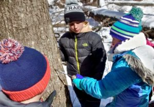 photo of tapping tree for sap to make maple syrup
