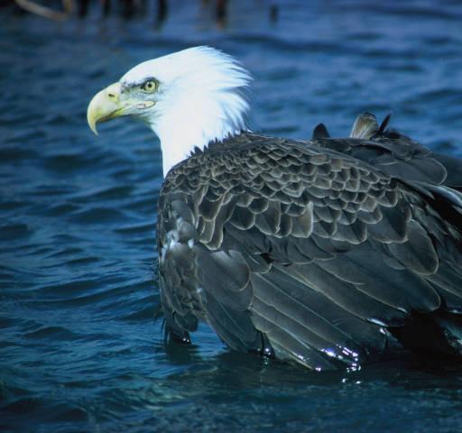 Eagle River Nature Center Calendar