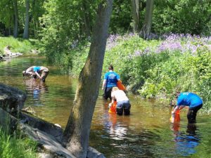 photo of people searching for freshwater mussels in the river