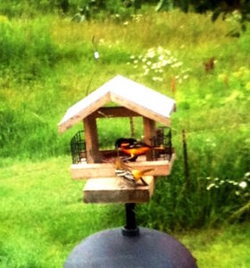photo of Baltimore orioles at jam feeder