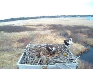 ospreys 4-9-14