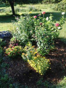 photo of a native butterfly garden