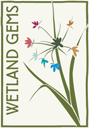Wetland Gem