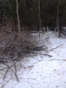 photo of brush pile at Zander Park