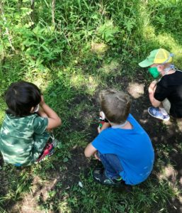 Campers looking at frog in the grass