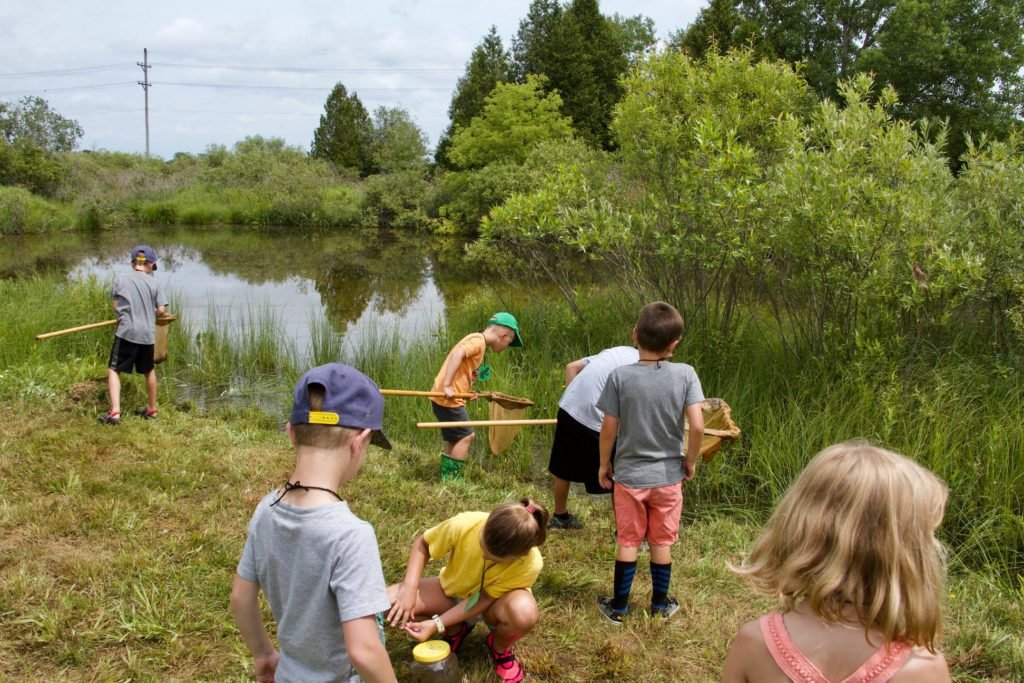 Campers using dip nets in the pond to find tadpoles