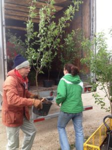 photo of 2 people unloading tree shipment