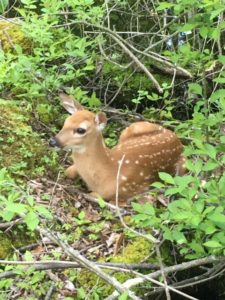 photo of fawn on ground