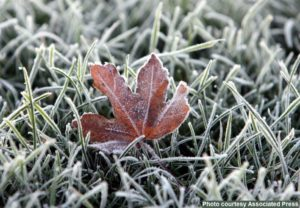 photo of frost on leaf