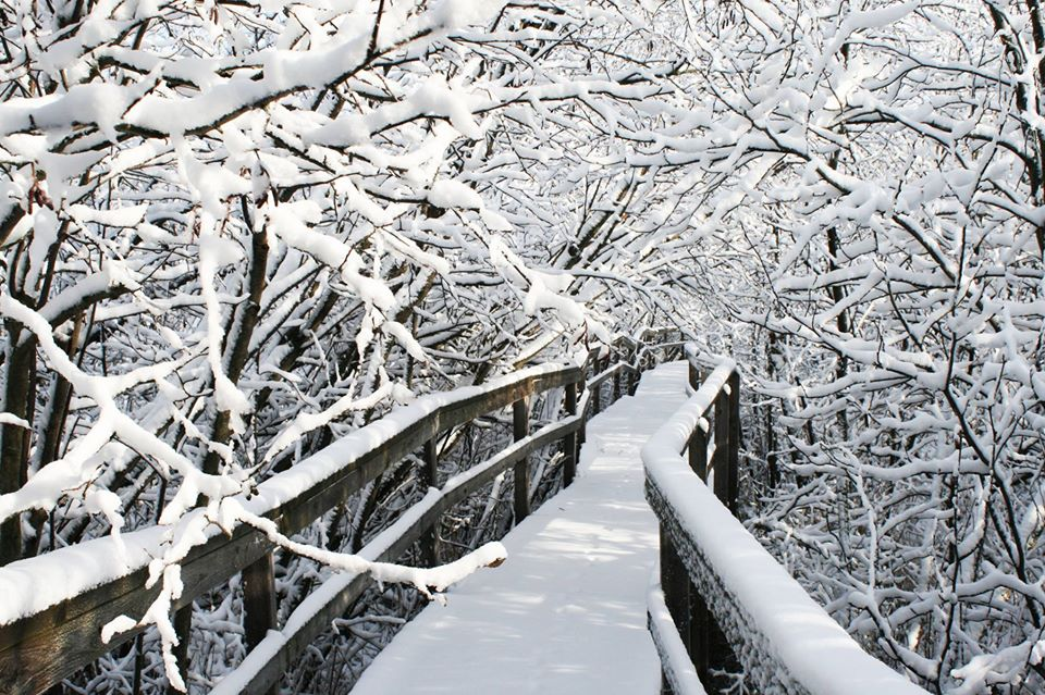photo of snowy wooden boardwalk with snow filled branches over it
