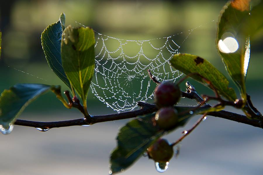 photo of spider web with pearls of dew on it in the sunlight