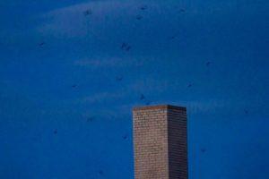 photo of swifts flying near chimney at dusk