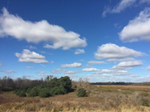 photo of Woodland Dunes Preserve with many clouds in the sky