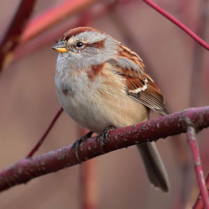 photo of tree sparrow on branch
